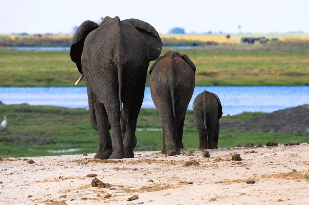 Das beste Safari-Erlebnis: geführte Tour oder selbst fahren?