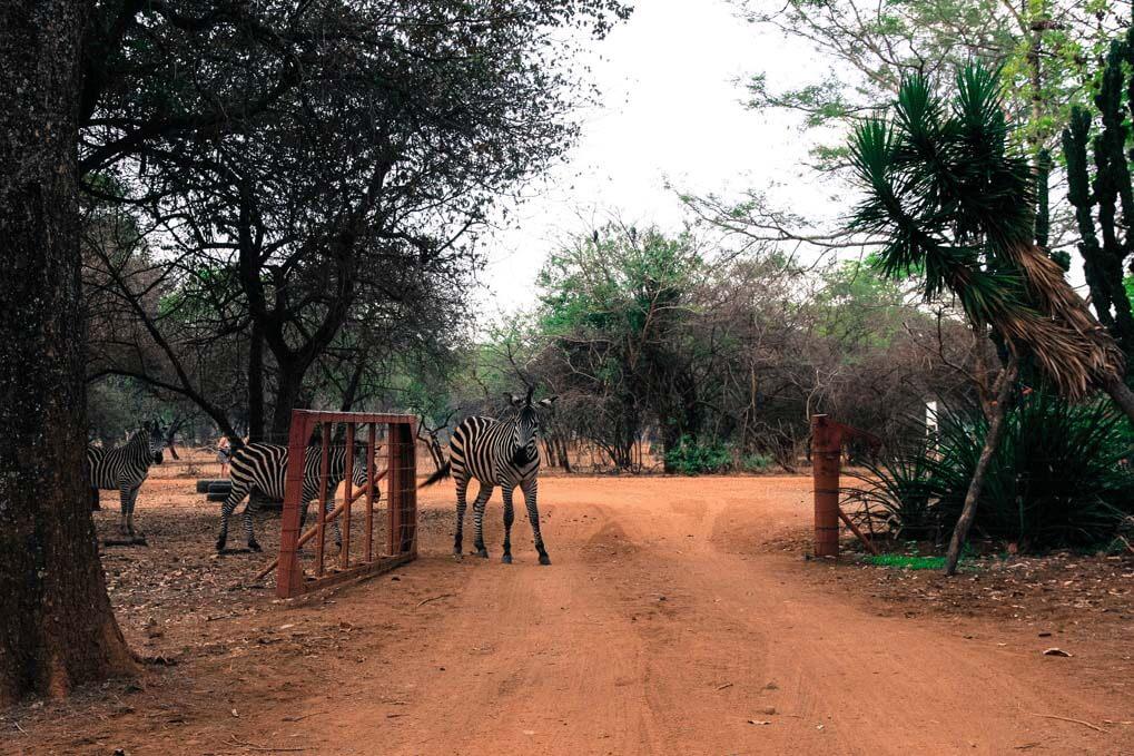 20121015_40D_Zambia-Malawi_8023_16