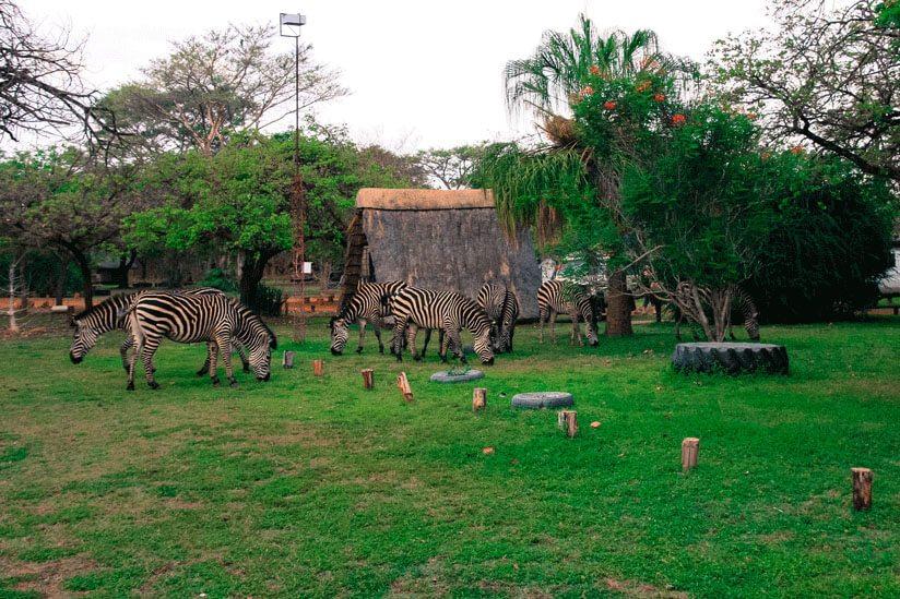 20121015_40D_Zambia-Malawi_8029_17
