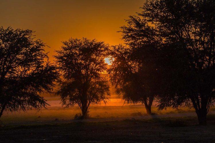 Kgalagadi Transfrontier Park: Infos und Tipps für Deine Safari