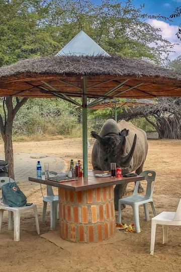 Camping unter wilden Tieren: Kharma Rhino Sanctuary - Naughty isst mein Sandwich