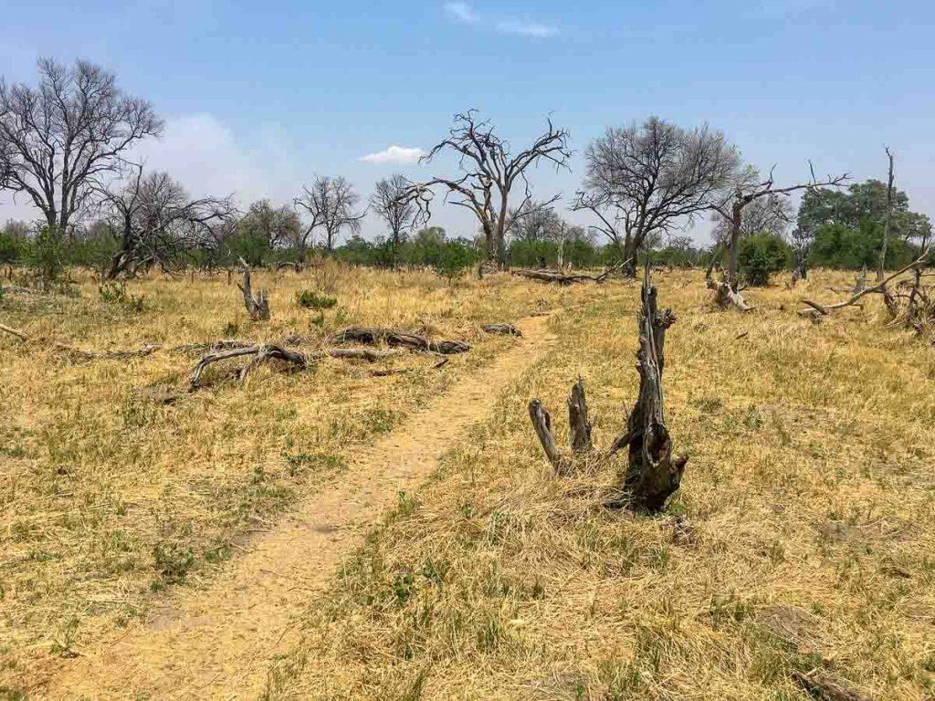 Camping unter wilden Tieren: Elefanten Trampelpfad in Botswana